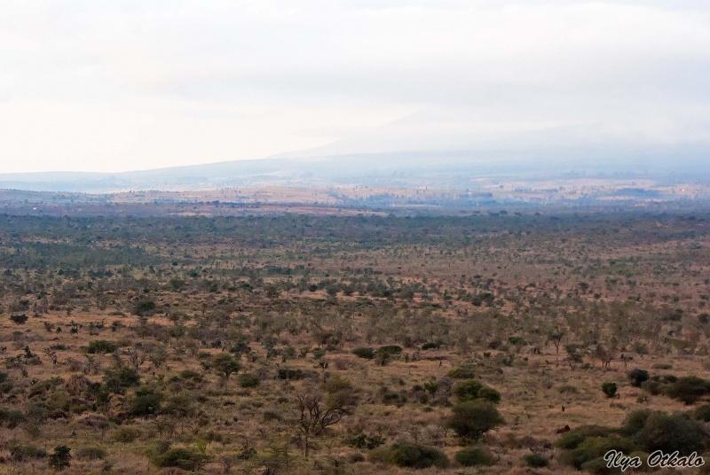 Национальный парк Амбосели в Кении. Вид на Килиманджаро в облаках.
