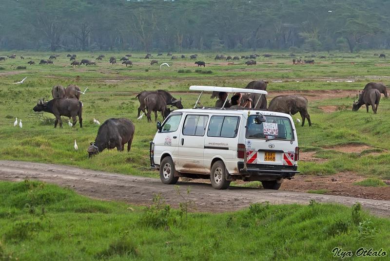 Сафари в Озеро Накуру, Кения