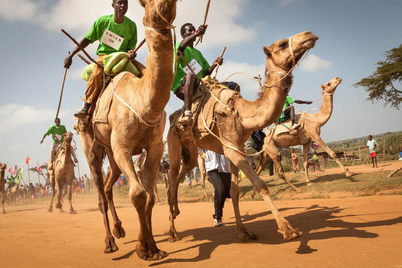 Забег верблюдов