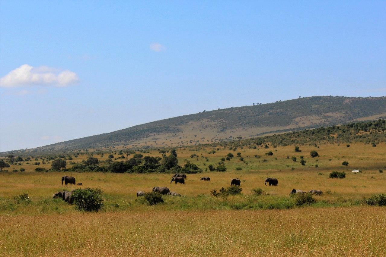 Отзыв про Кению, 2016 г.