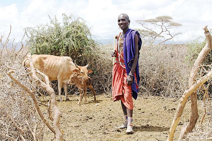 Кровы у Масаи, Кения