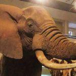 5 мест, которые нужно посетить в Найроби