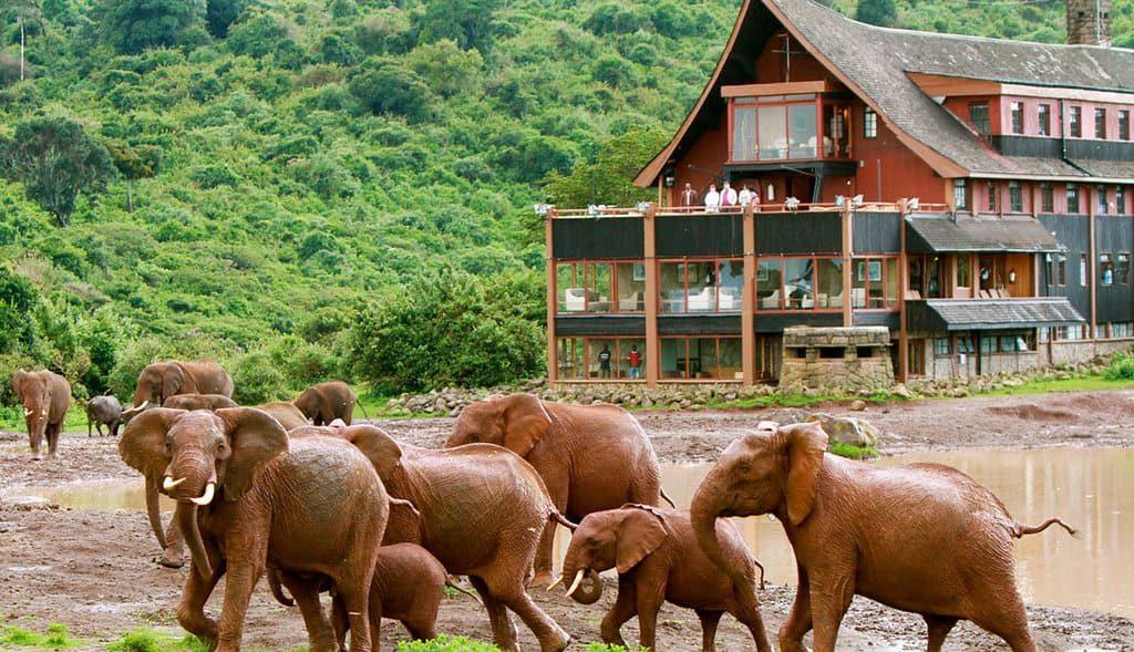 Слоны Кения