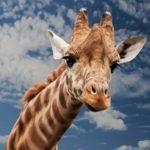 Отель с жирафами в Найроби