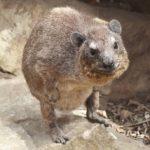 10 необычных животных Африки
