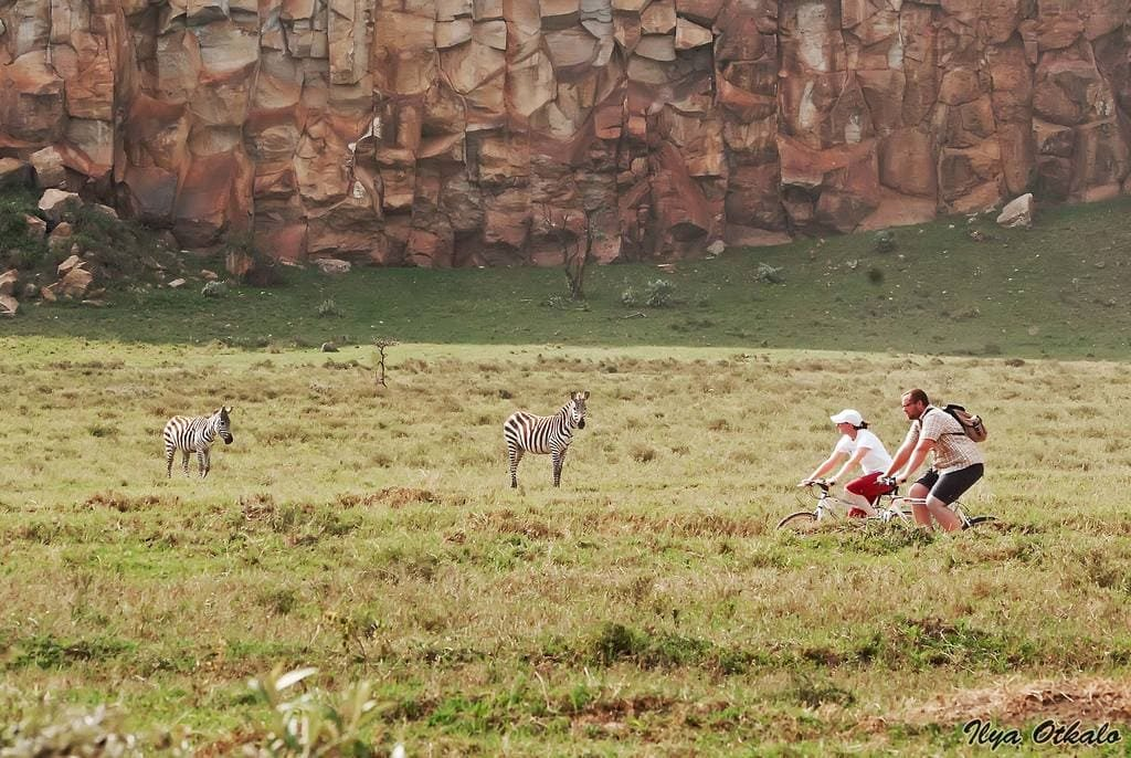 Кения Животные Африка