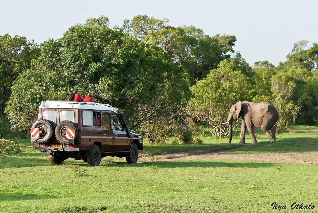 Масаи-Мара, Кения