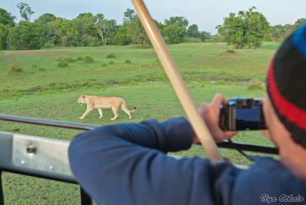 львица животные Африки