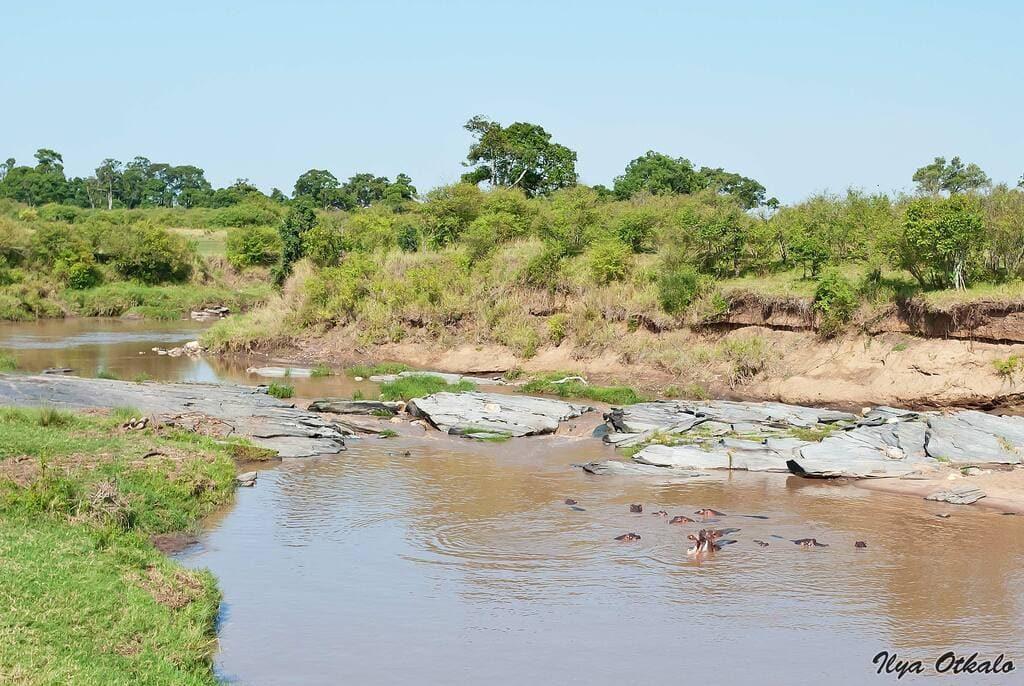 Бегемот Африка