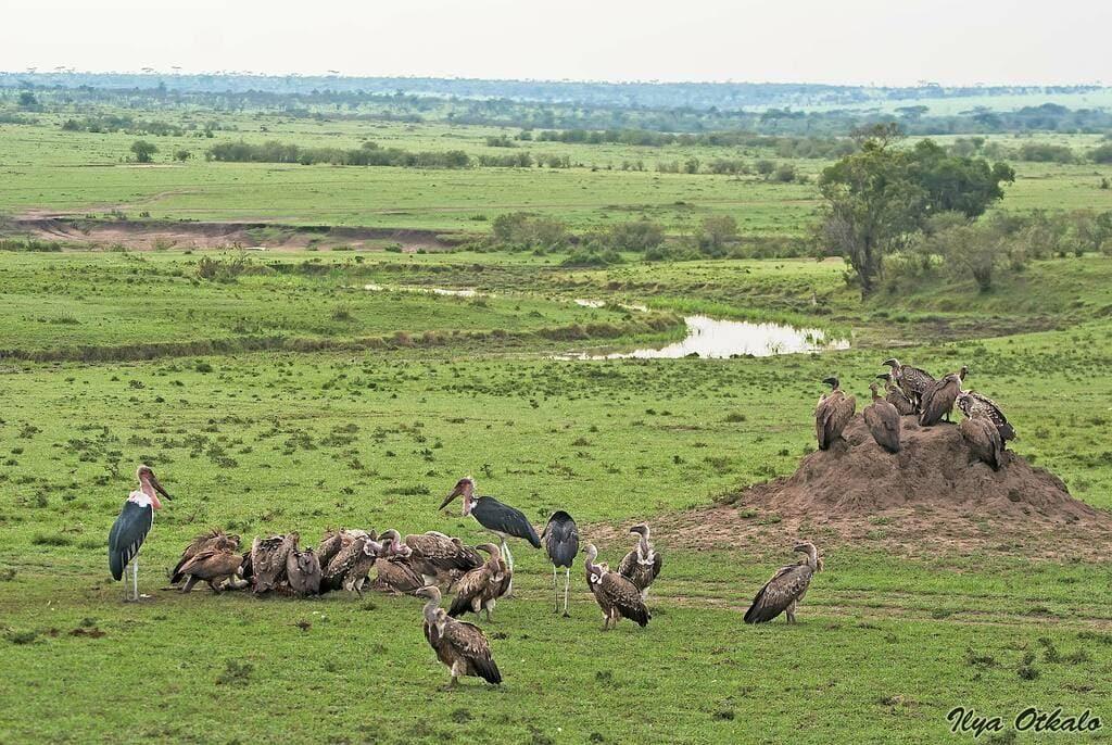 Кения животные Африки