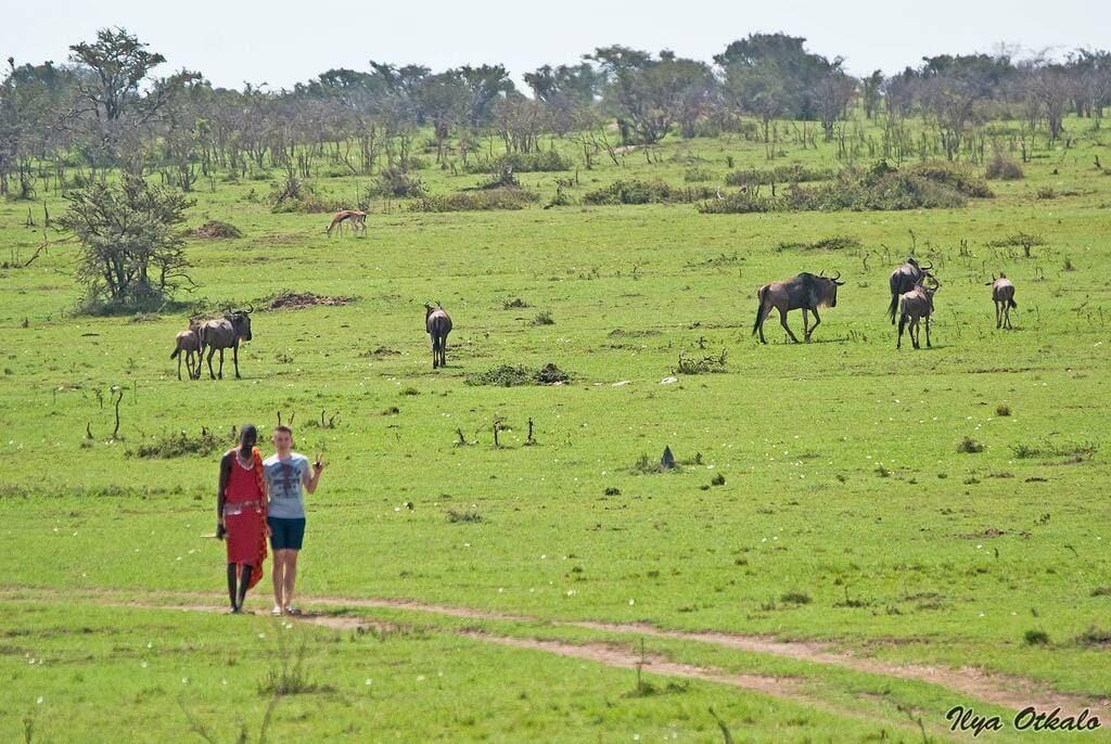 Масаи-мара Кения