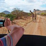 Кения: всё о стране