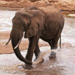 Кения: Памятка туристам