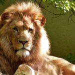 «Король лев» — это про Кению
