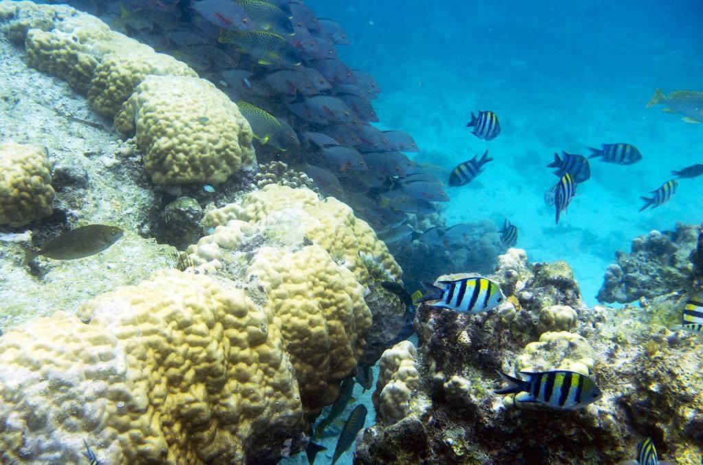 коралловый риф Африка