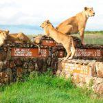 ТОП-10 самых опасных животных Африки