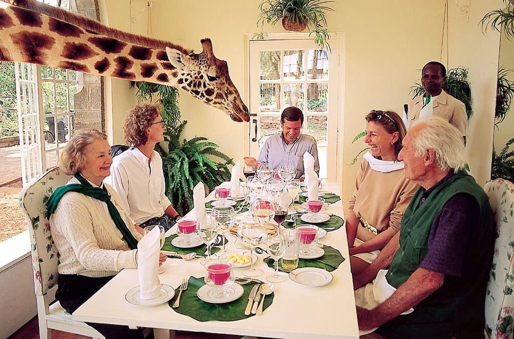 Найроби отель с жирафами