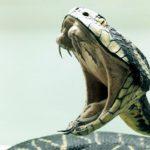 Топ 8 самых ядовитых животных в природе