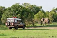 <p>Кения, Масаи Мара. Слон переходит дорогу.</p>