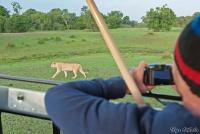 <p>Кения, Масаи Мара. Фотографируем льва</p>