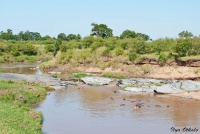 <p>Кения, Масаи Мара. Река с бегемотами</p>