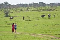 <p>Кения, Масаи Мара. Прогулки возможны только с масаями</p>