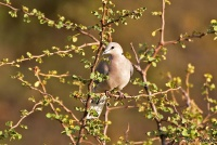 <p>Кения, Амбосели. Птицы Кении</p>