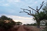 <p>Кения, Амбосели. Пейзаж с марабу</p>