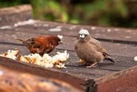 <p>Кения, Амбосели. Птиц можно покормить</p>