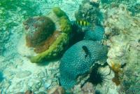 <p>Кения, Диани бич. Подводный мир.</p>