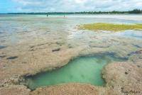 <p>Кения, Диани бич. Коралловый риф</p>