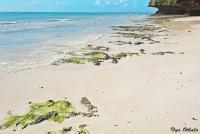 <p>Кораллы при отливе у отеля Leopard Beach</p>