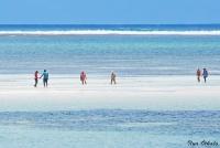 <p>На рифах можно наблюдать за жизнью обитателей моря</p>
