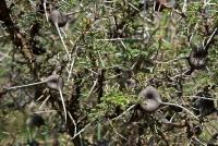 <p>Кения, Хеллс Гейт. Колючки, которые едят жирафы</p>