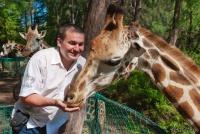 <p>Кения, Момбаса. Кормление жирафов в Халлер парке</p>