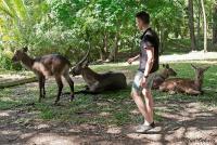 <p>Кения, Момбаса. В Халлер парке животные не пуганые</p>