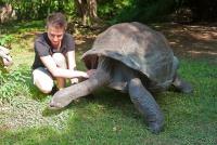 <p>Кения, Момбаса. Черепаха в Халлер парке</p>