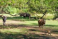 <p>Кения, Момбаса. Животные Халлер парка</p>