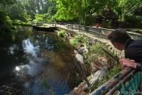 <p>Кения, Момбаса. Большие крокодилы, Халлер парк</p>