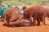 <p>Кения, Найроби. Слоны в парке Найроби</p>