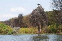 <p>Кения, озеро Найваша. Берега озера</p>