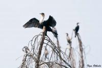 <p>Кения, озеро Найваша. Птицы на деревьях</p>