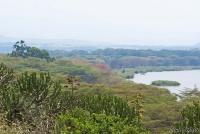 <p>Кения, озеро Найваша. Бурная растительность берега озера</p>