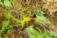 <p>Кения, озеро Найваша. Птицы Кении</p>