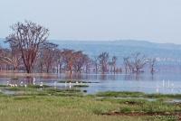 <p>Кения, озеро Накуру. Вид на озеро</p>