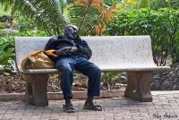 <p>Отдых в парке</p>