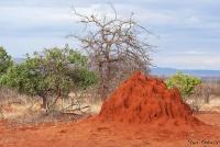 <p>Кения, Тсаво. Пейзаж с термитником</p>