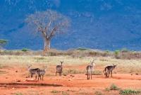 <p>Кения, Тсаво. Красное и синее</p>