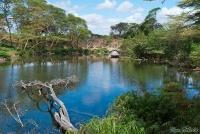 <p>Кения, Тсаво. Озеро</p>