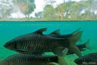<p>Кения, Тсаво. Рыбы за стеклом</p>